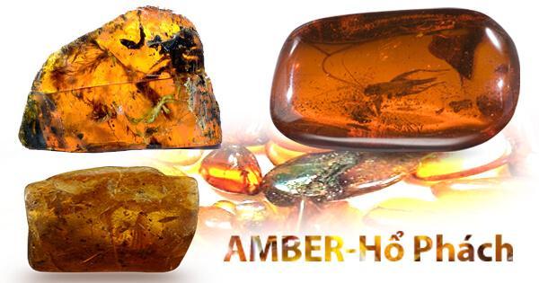 Amber-Hổ Phách